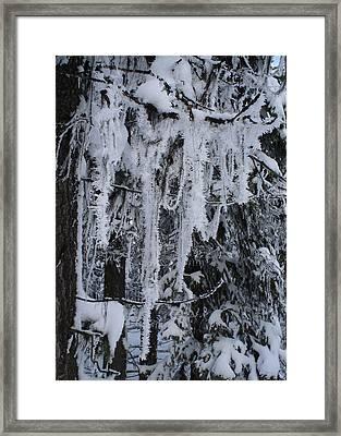 Sumpter Winter Framed Print by Caprice Scott