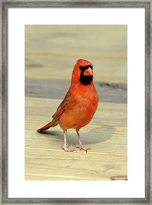 Sumthin I Can Help You With Framed Print by Gary Adkins