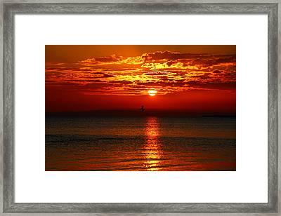 Sun And Bird Framed Print