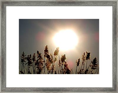 Sun And Grass 2  Framed Print by Lyle Crump