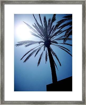 Sun And Palm Framed Print by Marina Owens