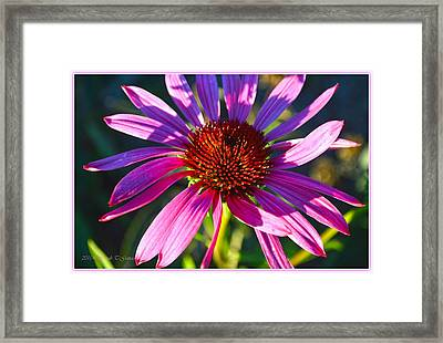 Sun And Shadow On Coneflower Framed Print