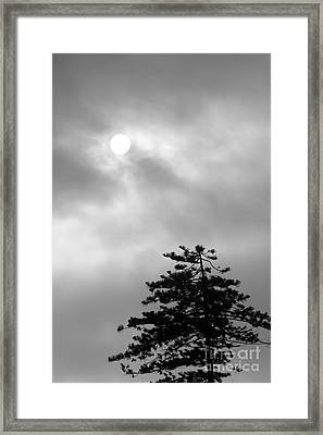 Sun And Tree Framed Print