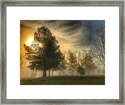 Sun And Trees Framed Print
