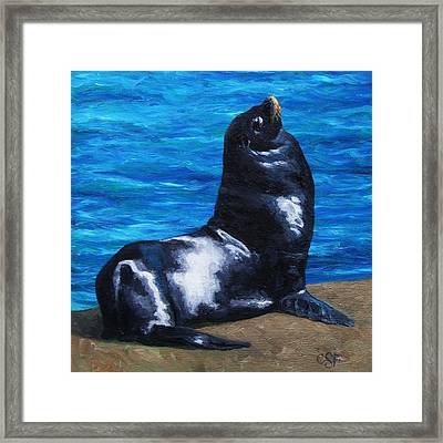 Sun Bathing Sea Lion Framed Print by Crista Forest