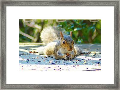 Sun Bathing Squirrel Framed Print
