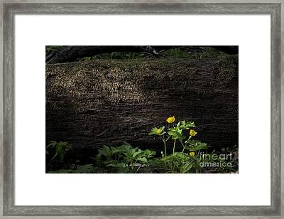 Sun Beam On Log Framed Print