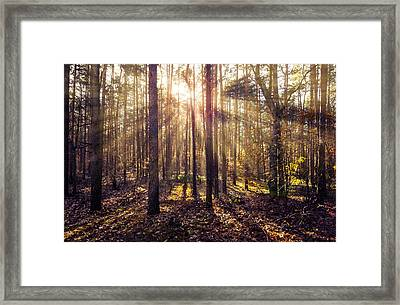 Sun Beams In The Autumn Forest Framed Print
