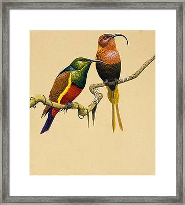Sun Birds Framed Print by English School