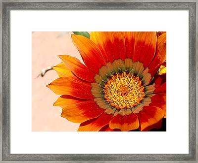 Sun Bloom Of Fire Framed Print by Edan Chapman