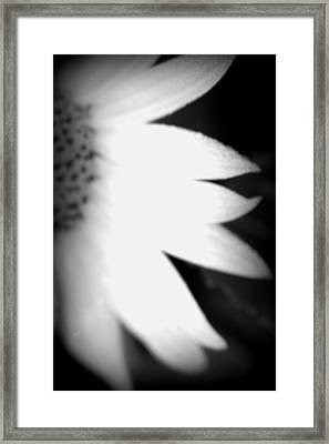 Sun Blur Bw Framed Print by Carolyn Stagger Cokley