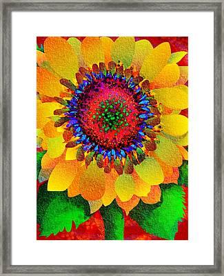 Sun Burst Framed Print