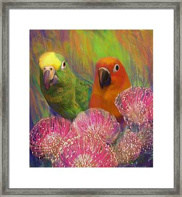 Sun Conure Framed Print by Julianne  Ososke