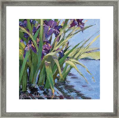 Sun Day - Iris In A Pond Framed Print by L Diane Johnson