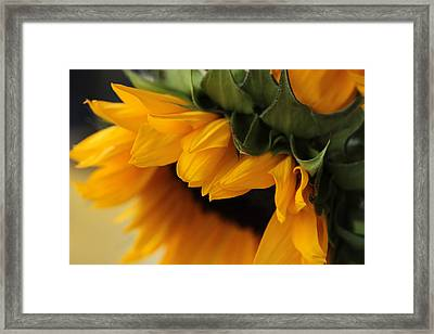 Sun Dozing  Framed Print
