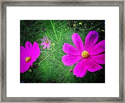 Framed Print featuring the photograph Sun-drenched by Olivier Calas