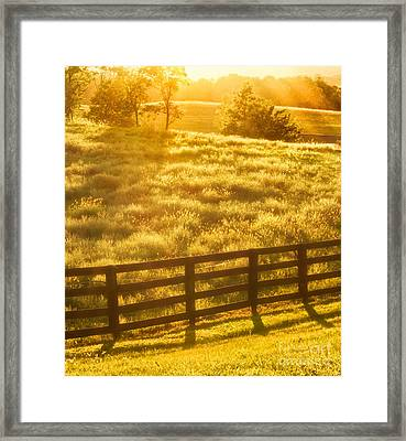 Sun-drenched Pasture Framed Print by Mark Miller