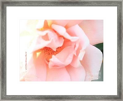 Sun-drenched Rose Framed Print