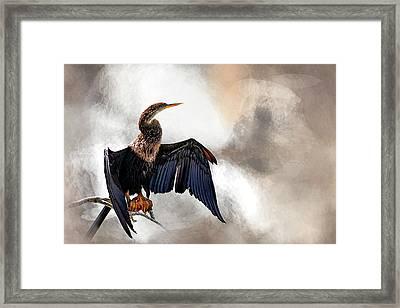 Sun-dried Framed Print by Cyndy Doty