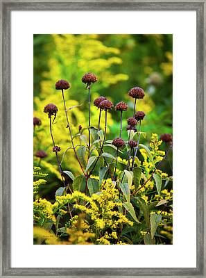 Sun Dried Flowers And Goldenrod Framed Print