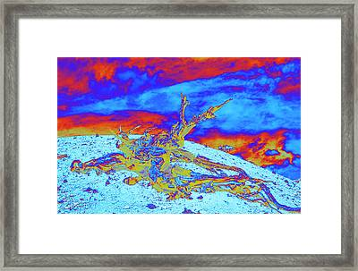 Sun Flare Framed Print by Jim Cook