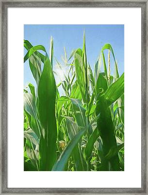 Sun Flare Through Corn Stalks Framed Print by Dan Sproul