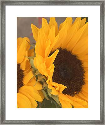 Framed Print featuring the digital art Sun Flower by Jana Russon