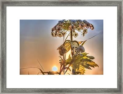 Sun Flower Framed Print by Nadia Sanowar