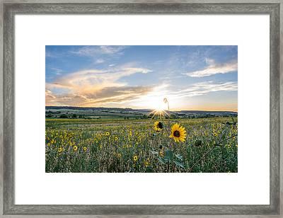 Sun Flower Sunset Framed Print