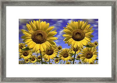 Sun Flowers Framed Print by Mike McGlothlen