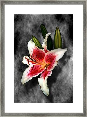 Sun Gazer Lily Framed Print by Roger Soule