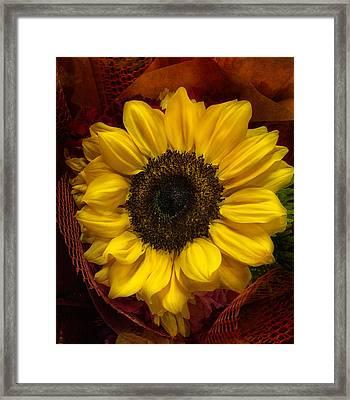 Sun In The Flower Framed Print