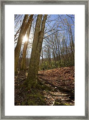 Sun In The Trees Framed Print by Michelle Shockley