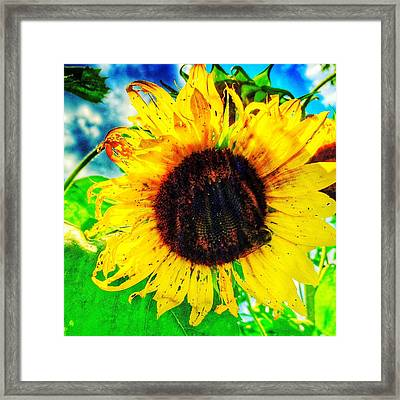 Sun Framed Print by Jame Hayes