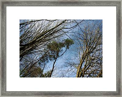 Sun Kissed Branches Framed Print by Jaeda DeWalt