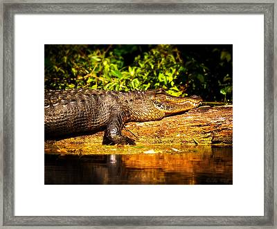 Sun-kissed Framed Print