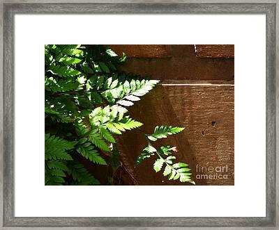 Sun-kissed Ferns Framed Print
