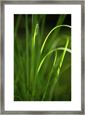 Sun-kissed Grass Framed Print by Christina Rollo
