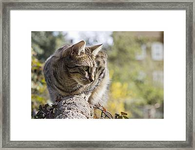 Sun-kissed Framed Print by Helga Novelli