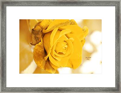 Framed Print featuring the photograph Sun Kissed Rose by Athala Carole Bruckner