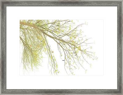 Sun Light On Tree Framed Print