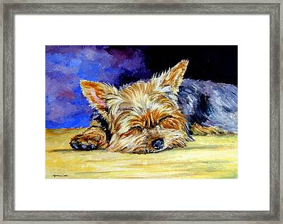 Sun Light Snoozer - Yorkshire Terrier Framed Print by Lyn Cook