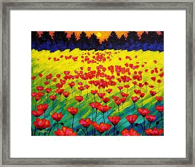 Sun Poppies Framed Print by John  Nolan