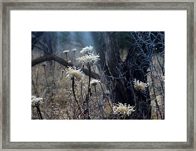 Sun Ray Framed Print