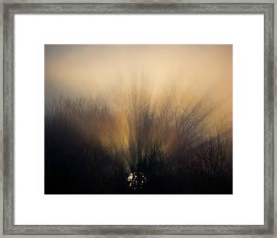 Sun Rays In The Fog Framed Print