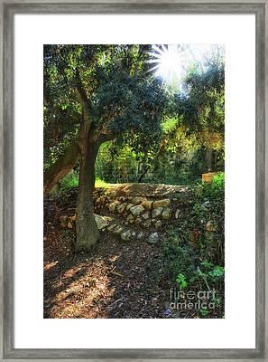 Sun Rays Through The Woods Framed Print by Stephan Grixti