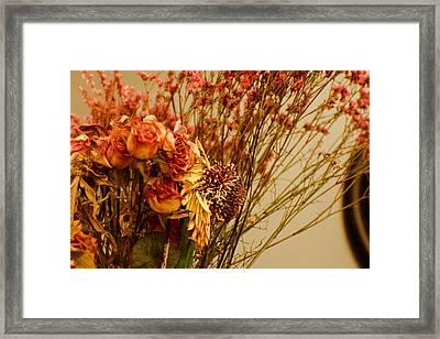 Sun Rose Cherry Framed Print