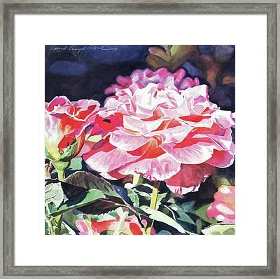 Sun Rose Framed Print