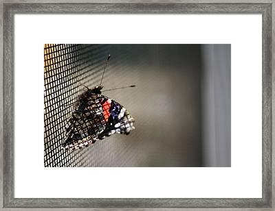 Sun Screen Framed Print