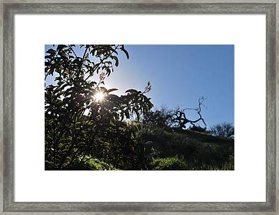 Framed Print featuring the photograph Sun Shines Through The Greenery by Matt Harang